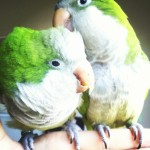 Petrie and Kiwi!